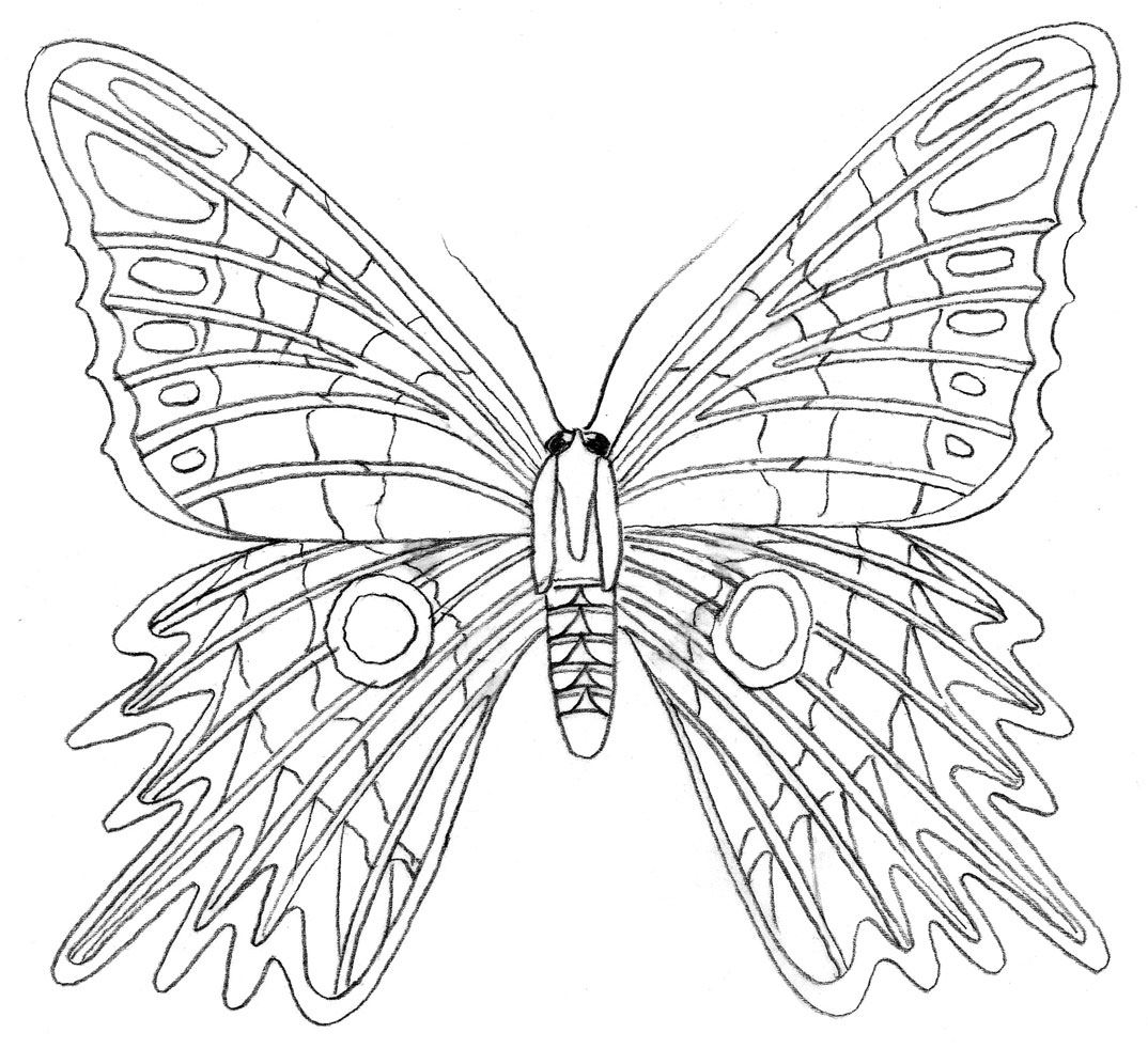 Colouring tutorial: How to draw a Butterfly