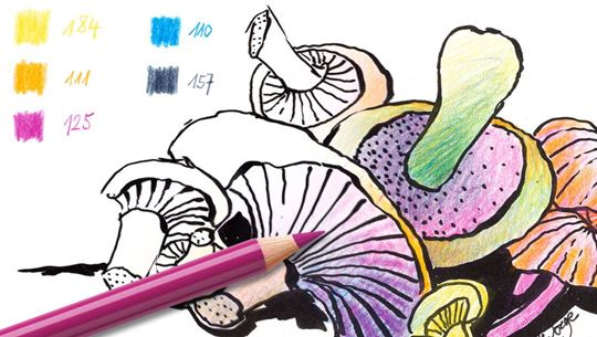 Colouring pages (medium): Mushrooms